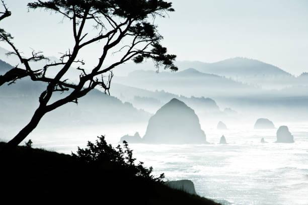 Silhouette of Trees on Misty Canon Beach, Oregon:スマホ壁紙(壁紙.com)