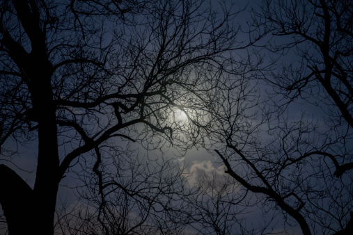 月「Silhouette of trees in the moonlight.」:スマホ壁紙(8)