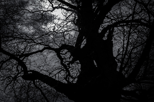 Evil「Silhouette of a Gnarled, Leafless Tree in Winter at Night」:スマホ壁紙(7)