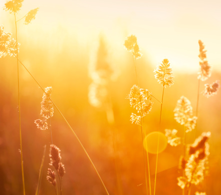 flower「シルエットの花の牧草地での日の出」:スマホ壁紙(16)
