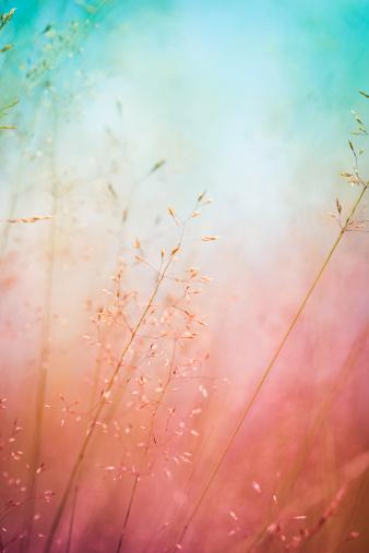秋「シルエットの花の牧草地での日の出または日没」:スマホ壁紙(14)