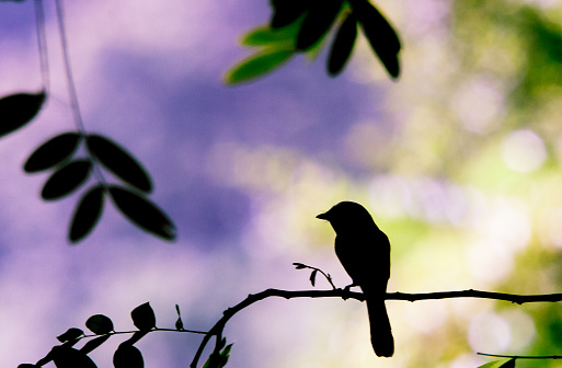 Defocus「Silhouette of a bird on a branch, Gorontalo, Indonesia」:スマホ壁紙(16)