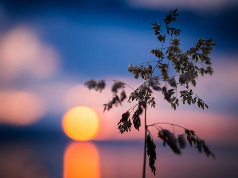 Defocus「Silhouette of a plant at sunset」:スマホ壁紙(7)