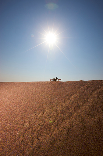 Namibia「Silhouette of Thick-Tailed Scorpion (Parabuthus transvaalicus) walking on sand, Namibia」:スマホ壁紙(8)