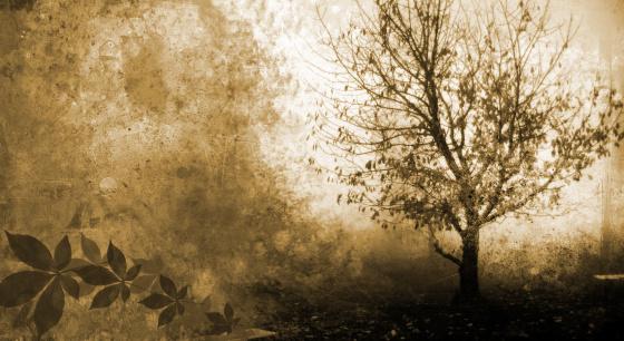 エデンの園「グランジの木のシルエット」:スマホ壁紙(6)