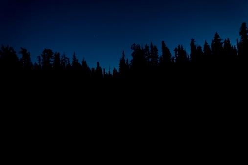 Utah「Silhouette of Trees at Night」:スマホ壁紙(14)