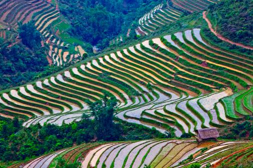 Vietnam「Historic rice terraces , Sapa,  Vietnam」:スマホ壁紙(10)