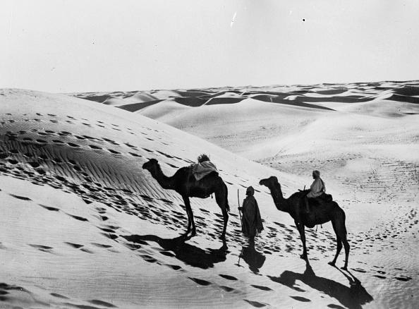 Tranquil Scene「Sahara Camels」:写真・画像(15)[壁紙.com]