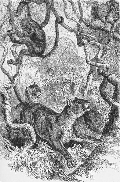 Animals Hunting「'The Puma',  c1885,」:写真・画像(16)[壁紙.com]