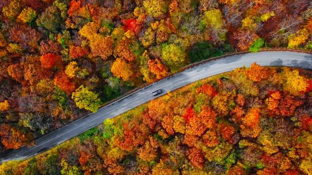 カラフルな秋の森の中の曲がりくねった山道の頭上の空中写真:スマホ壁紙(壁紙.com)