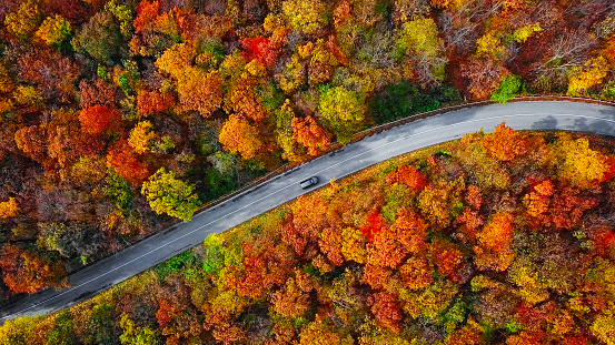 Drone Point of View「Overhead aerial view of winding mountain road inside colorful autumn forest」:スマホ壁紙(15)