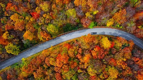 秋「カラフルな秋の森の中の曲がりくねった山道のオーバーヘッド航空写真」:スマホ壁紙(9)