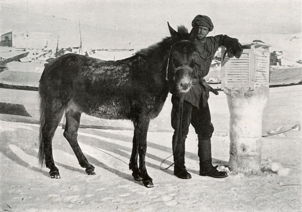 Ski Pole「Gran With Mule Lal Khan C」:写真・画像(2)[壁紙.com]