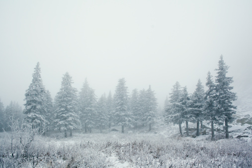 Frozen「Trees in snowy landscape」:スマホ壁紙(14)