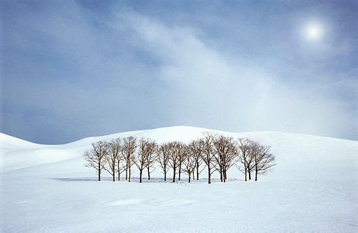 Hokkaido「Trees in snow covered field」:スマホ壁紙(9)