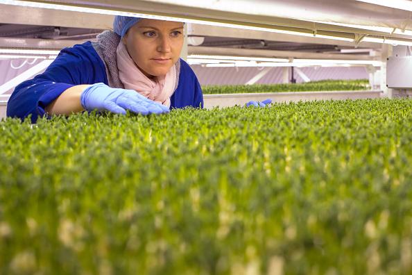 Wasabi「Urban Farming Goes Underground」:写真・画像(5)[壁紙.com]
