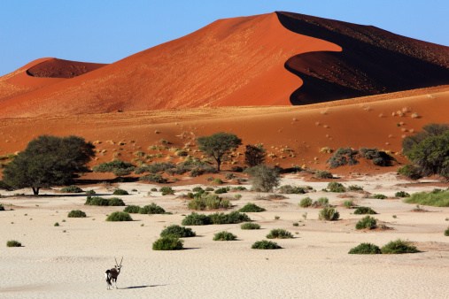 Gemsbok「Gemsbok and sand dunes」:スマホ壁紙(14)