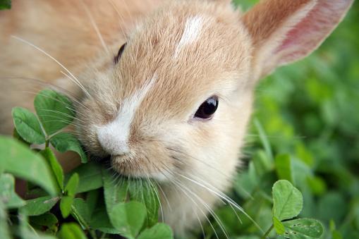 Rabbit - Animal「A rabbit munching the leaves of a green plant」:スマホ壁紙(9)