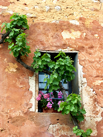 France「Dilapidated  wall with vine and pelargonium flowers,Rousillon,Provence,France」:スマホ壁紙(15)