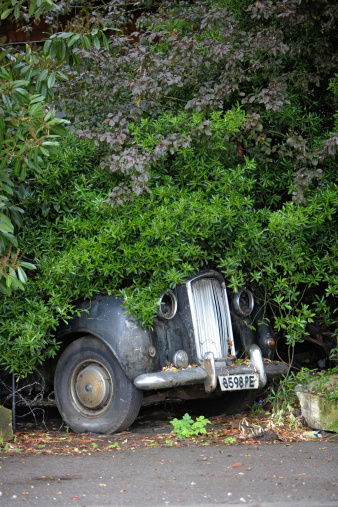 Lost「Dilapidated old fashioned car partially hidden by trees on side of road」:スマホ壁紙(1)