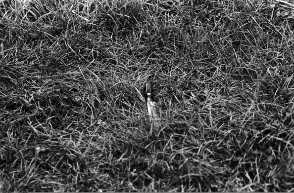 Obsolete「Discarded Knife」:写真・画像(12)[壁紙.com]