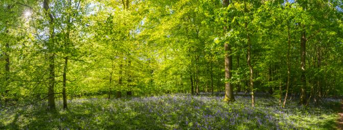 オーク林「太陽の光が差し込み、夏ののどかな森の森林のパノラマ」:スマホ壁紙(1)