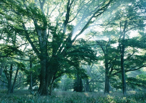 Tochigi Prefecture「Sunlight Streaming Through the Leaves of Trees」:スマホ壁紙(13)