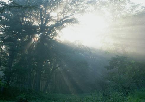 Nikko City「Sunlight Streaming Through the Leaves of Trees」:スマホ壁紙(1)