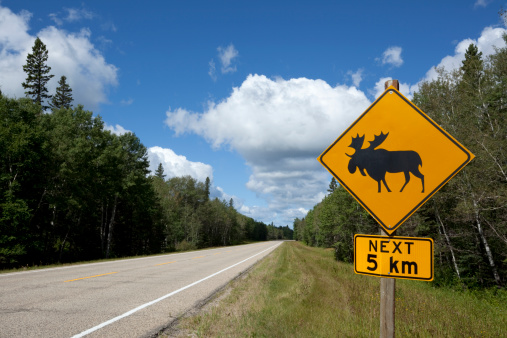 Manitoba「Riding Mountain National Park」:スマホ壁紙(6)