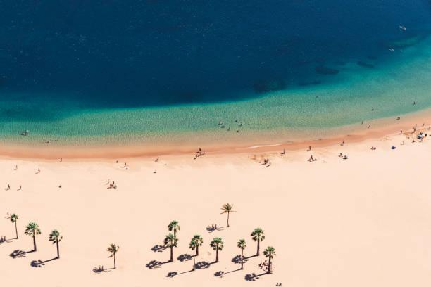 Paradise sandy beach with palms, space for copy text:スマホ壁紙(壁紙.com)