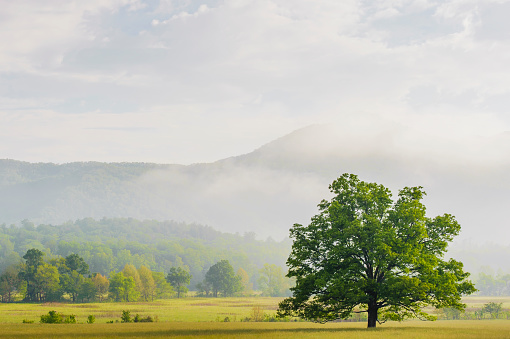 Cades Cove「Early morning in cades cove great smoky mountains national park」:スマホ壁紙(6)