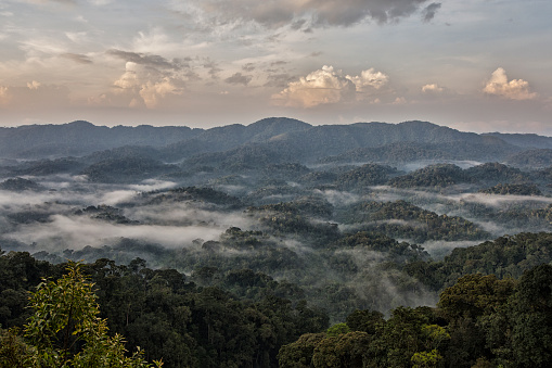 Rainforest「Early morning mist in the rainforest of Rwanda」:スマホ壁紙(2)
