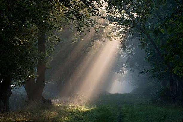 Early morning sun rays filtering through woods:スマホ壁紙(壁紙.com)