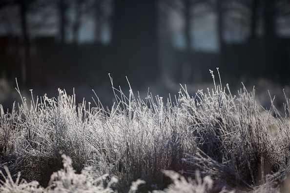 Grass Family「Widespread Frost As The UK Braces Itself For Severe Cold Weather」:写真・画像(16)[壁紙.com]