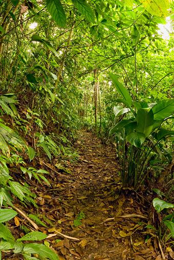 International Biosphere Reserves「Path in tropical rain forest」:スマホ壁紙(6)