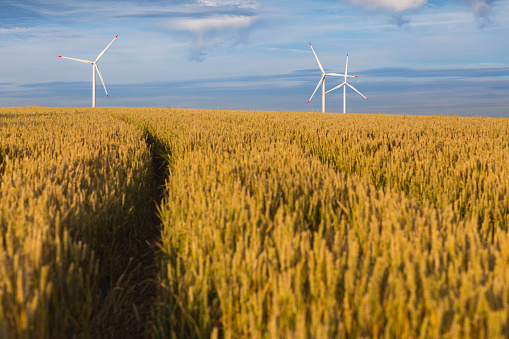 Focus On Background「Renewable energy windmills admist grain field」:スマホ壁紙(9)