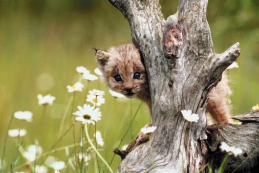 動物の赤ちゃん「Cub」:スマホ壁紙(5)