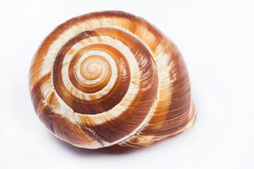 snails「Swirl shell」:スマホ壁紙(4)