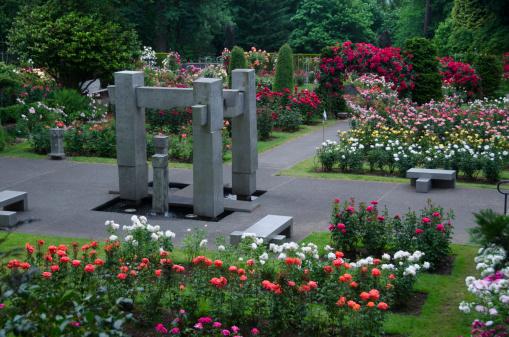 flower「Portland Rose garden」:スマホ壁紙(4)