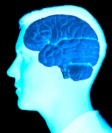 Cerebellum「Brain scan」:スマホ壁紙(13)
