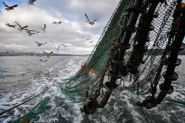 Prawn - Seafood「Scottish Seafood Exports At Risk If Brexit Brings Shipping Delays」:写真・画像(11)[壁紙.com]