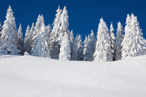 Switzerland「An image of fur trees smothered in white snow」:スマホ壁紙(6)