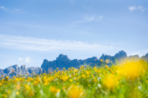 Focus On Background「Italy, Dolomites, Rosengarten, View of field with mountain range in background」:スマホ壁紙(3)