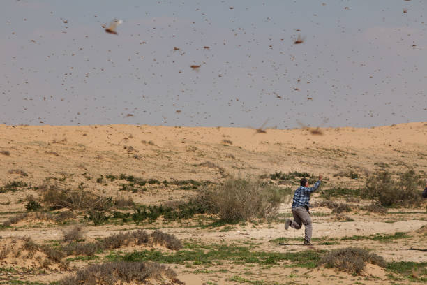 A Swarm Of Locusts Arrives In Israel:ニュース(壁紙.com)