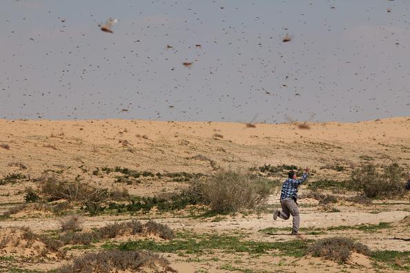 Land「A Swarm Of Locusts Arrives In Israel」:写真・画像(9)[壁紙.com]