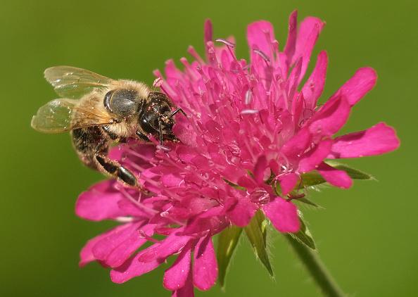 Violet - Flower「Insects To Receive New Urban Habitats Under Federal Program」:写真・画像(8)[壁紙.com]