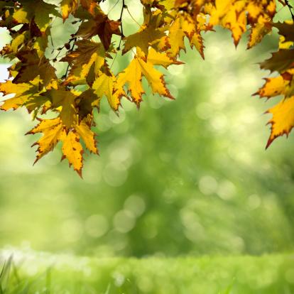 秋「新鮮の庭園」:スマホ壁紙(1)