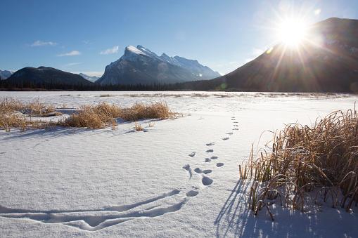 Snowdrift「Animal tracks on frozen lake.」:スマホ壁紙(7)