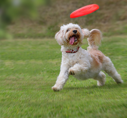 Joy「Dog catching frisbee」:スマホ壁紙(14)