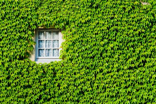 Abbey - Monastery「Window on a Ivy Covered Wall」:スマホ壁紙(6)